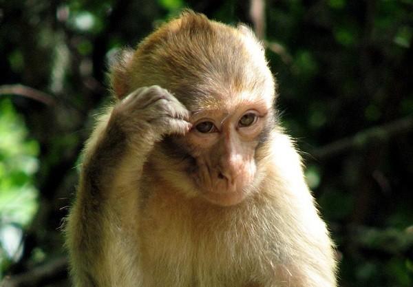 Tiếng Khỉ kêu gọi đàn 3BgX.mp3