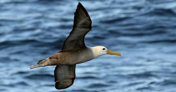 Tiếng Chim hải âu kêu trên bãi biển ta5q.mp3