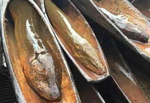 แบ่งปันเคล็ดลับการทำเหยื่อปลาไหลมรดกตกทอด