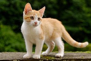 Suara kucing marah sama tikus xgug.mp3