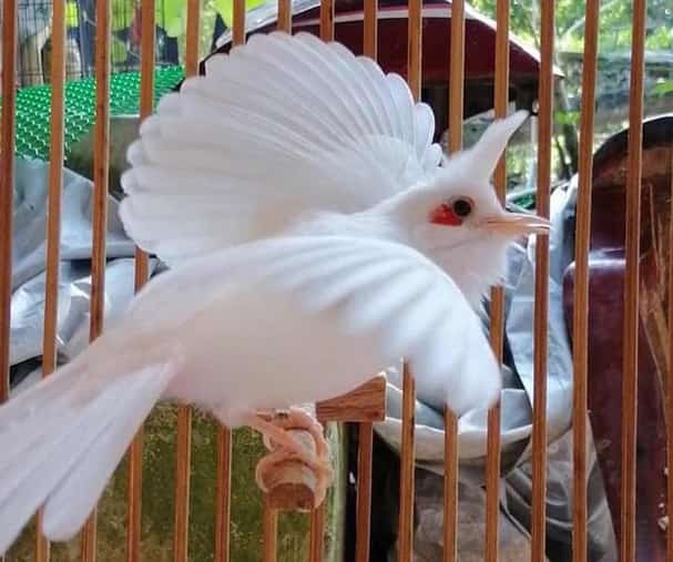 นกปรอดหัวโขน ราคาเท่าไหร่? ราคาขึ้นอยู่กับจุดใด?