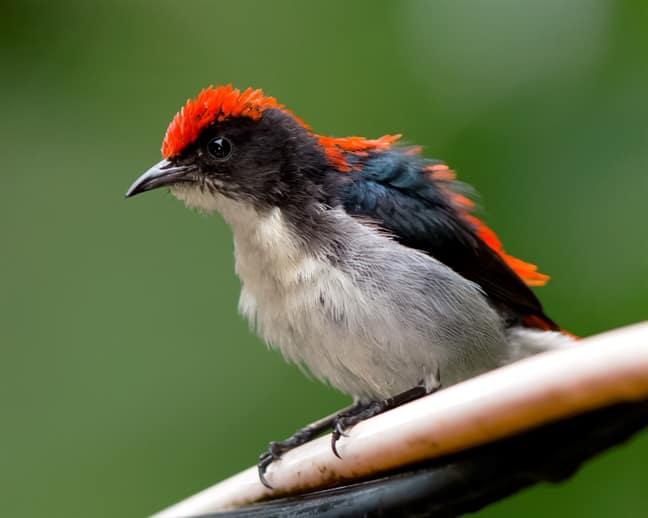 นกสีชมพูสวน ราคาเท่าไหร่? เลี้ยงง่ายไหม ดูแลอย่างไร?